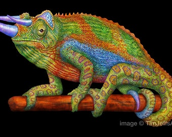 Jackson's Chameleon Colored Pencil Drawing