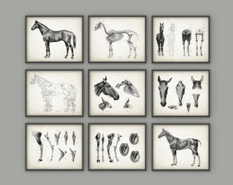 Horse Anatomy Posters Set of 9 - Horse Illustration Prints - Veterinary Horse Anatomy Charts - Equine Skeletal Anatomy - Horseriding Gift