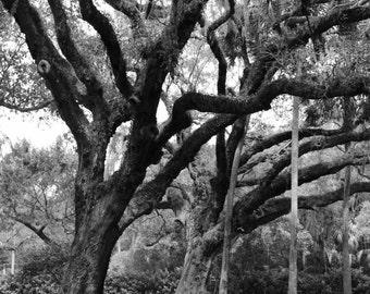 Landscape Photography | Oak Hammock