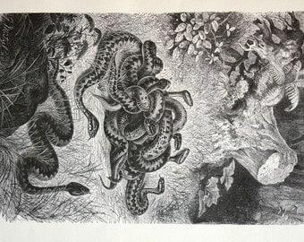 Hasil gambar untuk nest of vipers