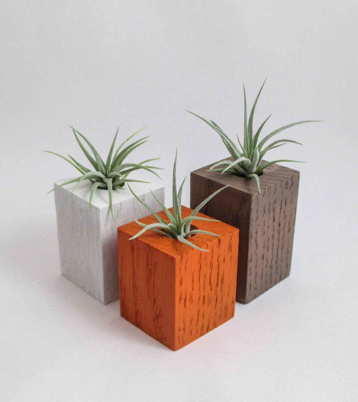 Wood air plant holders 3 air plants air plant terrariums for Air plant planters