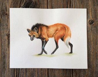 Maned Wolf Original Watercolour Painting | 11x14 inches | By: Magda Opoka