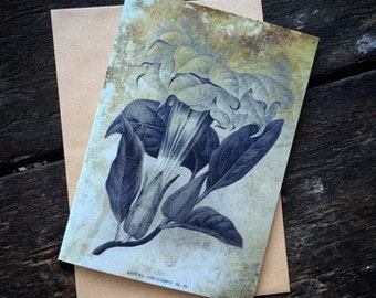Datura, Witchcraft Antique Botanical Print, Witch Herbs, Book of Spells, Wiccan Altar, Witch Home Decor, Luxury greeting card.