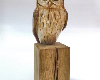 Tawny owl - Sleepy head