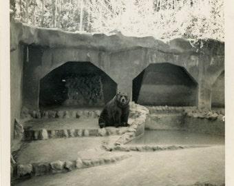 "Vintage Photo ""Barry...The Bored Bear"" Zoo Animal Snapshot Old Antique Photo Black & White Photograph Found Paper Ephemera Vernacular - 166"