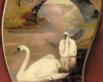 Embossed Antique Edwardian Unused Color Postcard, Artist Pallet, Edwardian Swans, Printed in Germany
