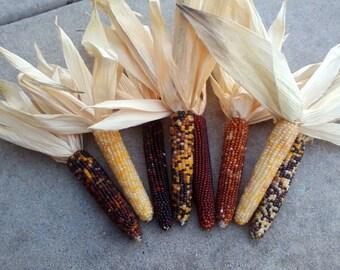 "Mini Indian Corn,  30 count,  5"" to 6"""