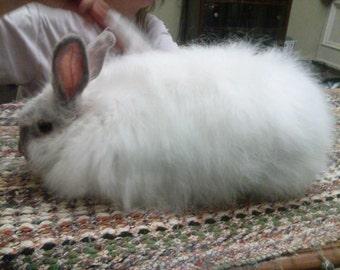 White Angora Rabbit Fiber (0.5 ounces)