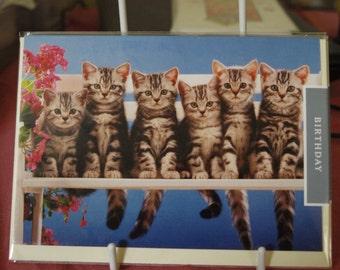 Kittens Sitting on a Bench Birthday Card