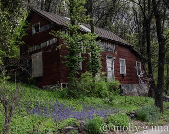 abandoned house photography spring flowers decay 8x10 11x14 16x20