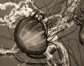 "Jellyfish abstract black and white Photographic Print, ""Jellyfish"""