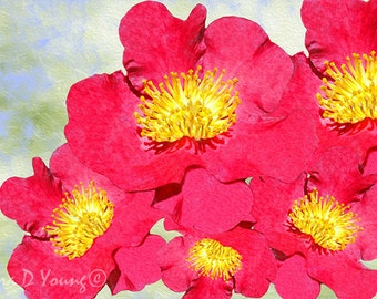 Red Camellia Flower Blossoms, Flower Photography, Flower Art Print, Red and Yellow, Yuletide, Gift for Her, Christmas Season, Fine Art Print