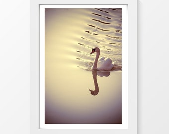 """Hanging out / Swan bird river ripple reflection photo printable art wall art home decor downloadable art to print yourself / A3 / 11"""" x 17"""""""