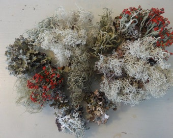 Mixed Lichen and Moss