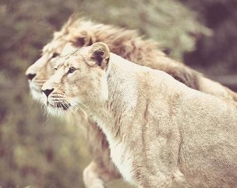 Lions's 2