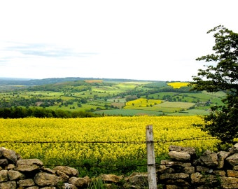 Travel Photography, England, UK, Gloucestershire, Cotswolds, Rapeseed Field, Yellow