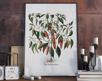 Red Pepper Plant Illustration, Pepper Botanical, Pepper Plant Antique Print, Vintage Plant, Kitchen Decor - VA024