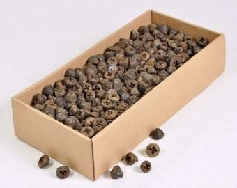 300 g. Eucalyptus Pod, Eucalyptus seeds
