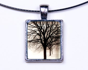 Chicago Wilson Park Tree Series: Photo 1