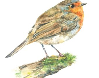 Robin watercolor painting - bird watercolor painting - 5x7 inch print - 0061