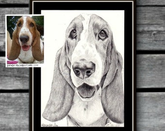 CUSTOM PET PORTRAIT from your favorite photo, Pet Memorial, Pet Portrait, Custom Pet drawing, Basset Hound, Gift for her.