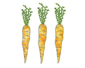 Carroots Trio -- kitchen or dining room art -- vegetable art print
