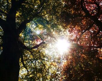 Sunshine through the trees in Autumn