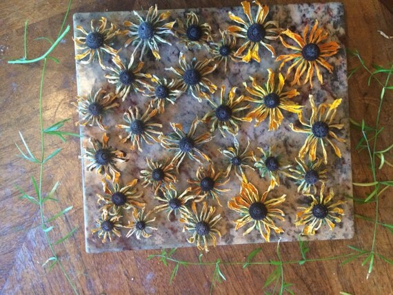 Real dried black eyed susan flowers orange petals for Dried flowers craft supplies