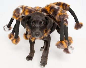 Spider Dog Costume!