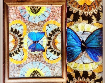 Real butterfly wing tray