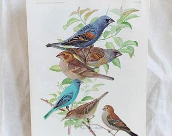 Bird Print Nº 85   Birds of America