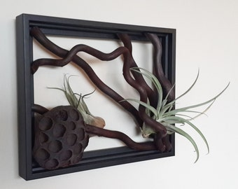 "8"" x 10""  Branch Art. Living wall - Morus Branches"