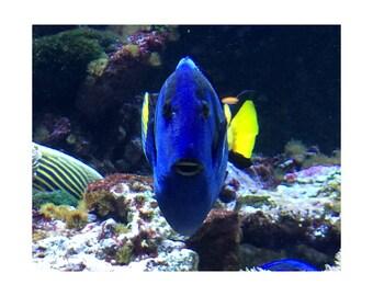 Fish No. 1; Tale of a Deep Blue Fish - Color Sea Life Print - FREE SHIPPING