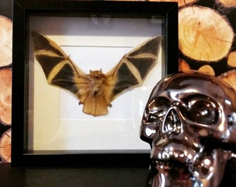 Framed Painted Bat, taxidermy bat,
