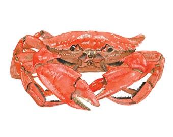 Food Illustration Crustacean CRAB Watercolour Illustration Print
