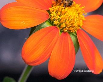Fine Art Photography Print // Flower // Bee // Nature // Macro Photography