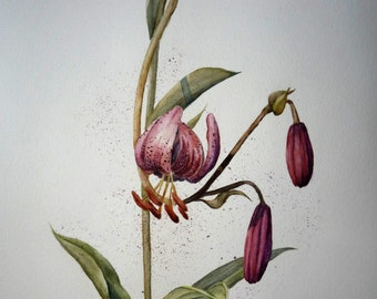 The lilium pink lily original watercolor painting flowers