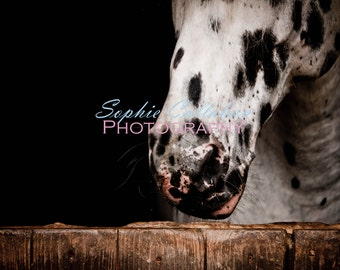 On the Nose - Horse Photography
