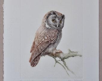 Boreal owl - handmade copper-plate etchings&engravings print