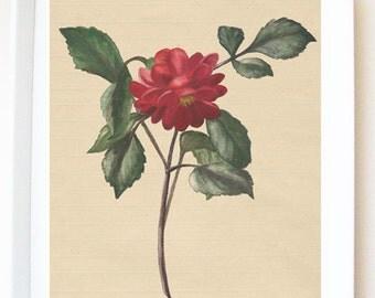Print of original painting 'Red dahlia', art print, original illustration, floral, wall art