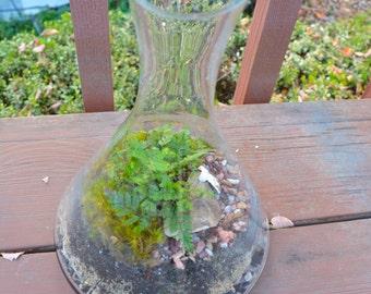 Fern in Glass