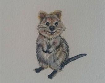 Quokka Miniature ACEO painting, Australian endangered species