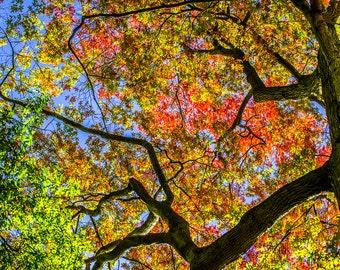Princeton Fall 5