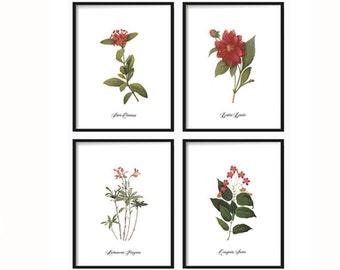 Botanical Print Set - Art Prints Vintage - Illustration - Vintage Print - Wall Art - Home Decor - Botanical Illustration