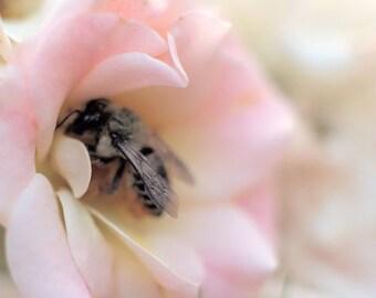 Nectar Perfume Oil