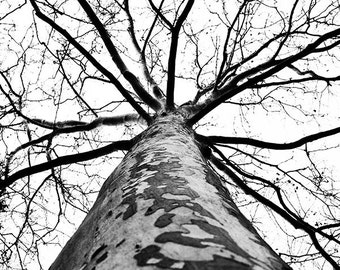 Branches; nature photography; black and white