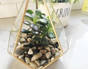 Terranium, succulent, greenery, houseplant, cactus, plant,