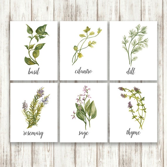 Kitchen Herbarium Art: Botanical Print Set Herb Print Set Herb Prints Botanical