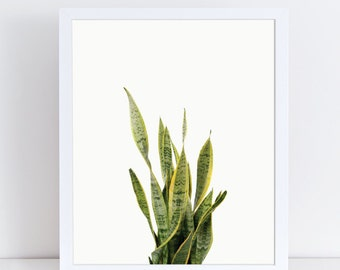Plant Prints, Plant Nursery, Plant Photo, Agave Art, Botanical Poster, Snake Plant, Mother In was Tongue, Viper Bowstring, Tropical Plants.
