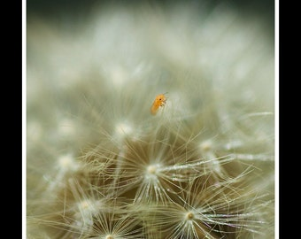 insect on dandelion print dandilon flower photography macro fine art abstract photo square
